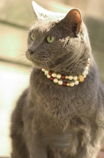 Fifiany & Co. Pet Pearl Collar for Cats and Dogs