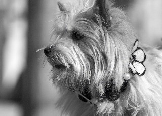 Fifiany & Co. Designer Pet Collars for Dogs and Cats